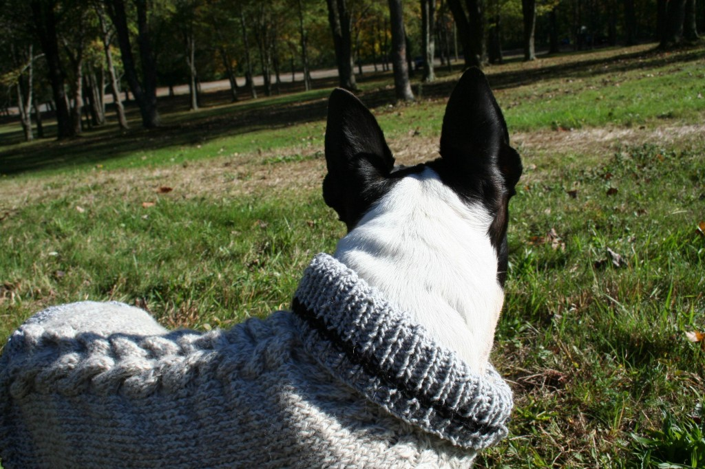 Chewy Moo Dog Knits