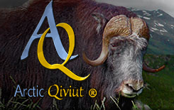 Arctic Quiviut, luxurious musk ox yarn and patterns for this rare fiber.