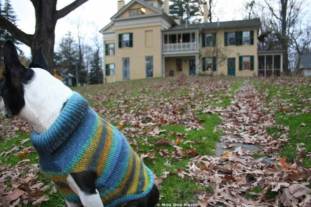 Chewy, a beloved Boston terrier, visits Miss Emily at The Homestead. Photo Moo Dog Knits.