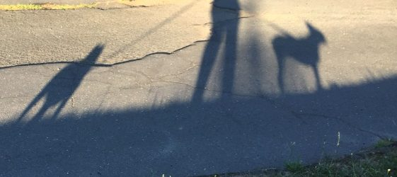 Shadows of walker and two dogs
